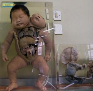 Bangkok Forensic Museum